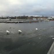 Djurgården 2016-01-31